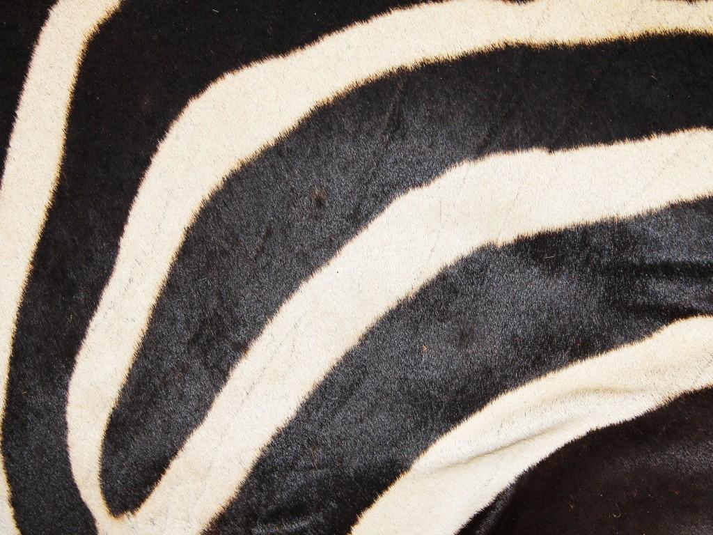 texture18